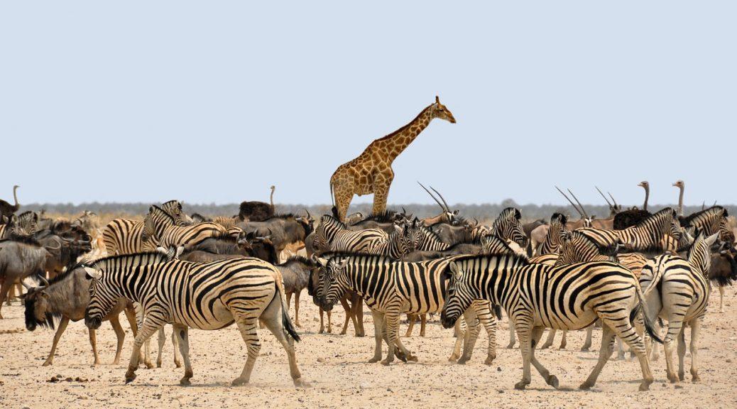 10 raisons de voyager en Afrique