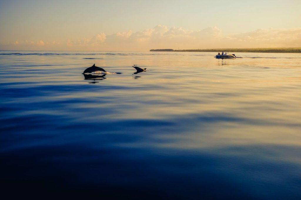 Nager avec les dauphins de l'île Maurice