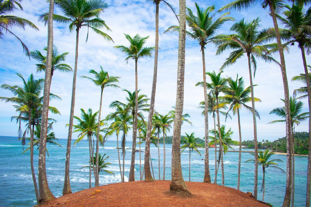 Quelle période aller au Sri Lanka ?